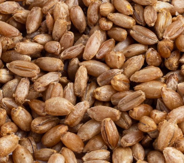 Grain Closeup 2