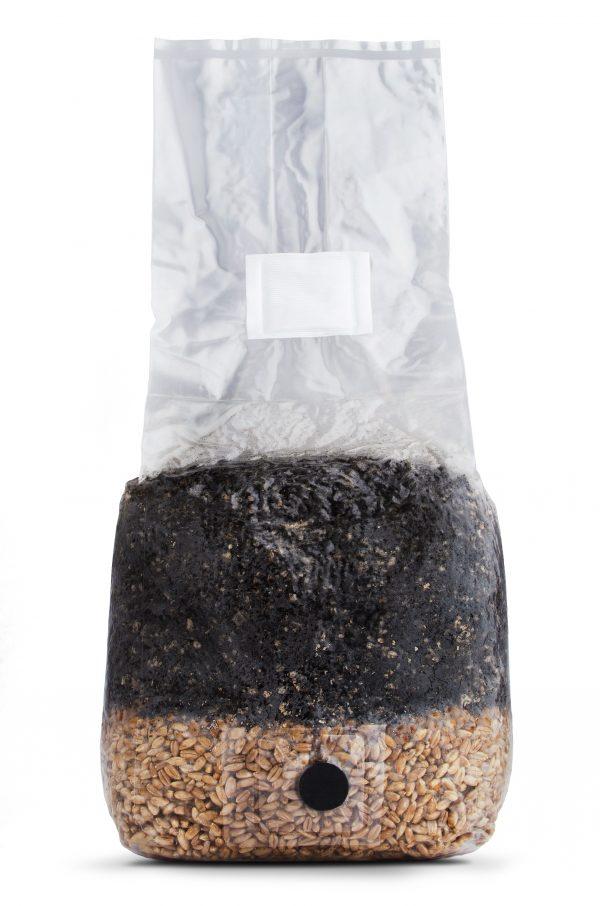Mushroom Grow Bag